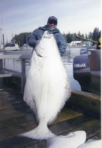 Halibut are the largest game fish and considered by many to be the best table fare.  Booking a charter with Fenton Bros will increase your chances of putting fish like this in the box.